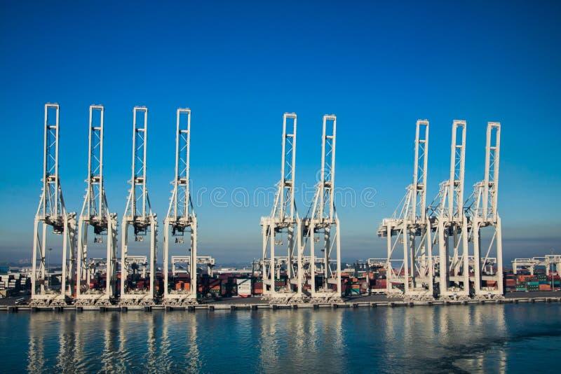 Terminale di contenitore nel porto di Jebel Ali fotografia stock libera da diritti