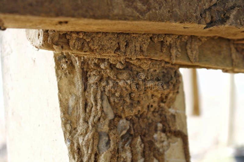 Termit är orsaken av att förfalla trä, speciellt huset, som är trä, måste avlägsna termit eller skydda den arkivfoto