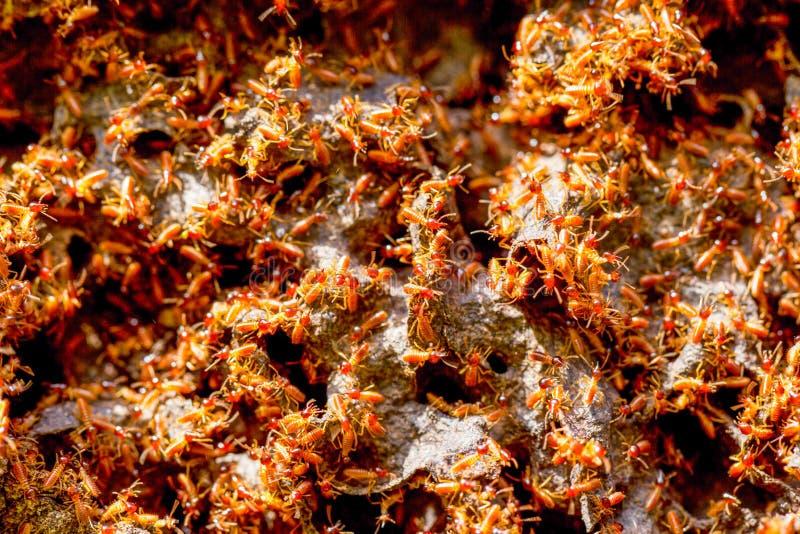 Termit koloni zakończenie Up obraz stock
