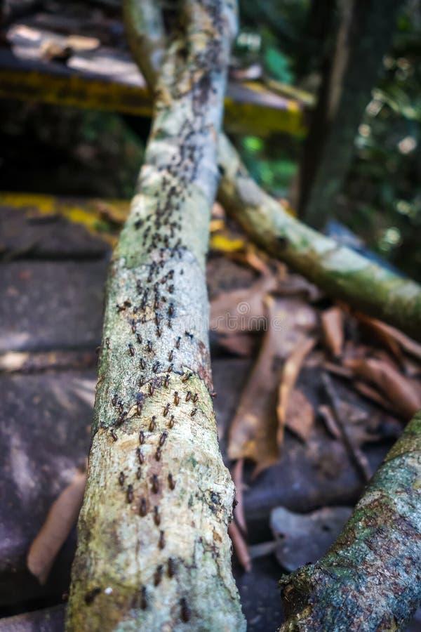 Termit kolonia, Taman Negara park narodowy, Malezja obraz stock