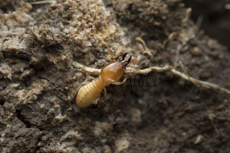 Termit- och termitkulle på naturbakgrund in och South East Asia royaltyfri fotografi