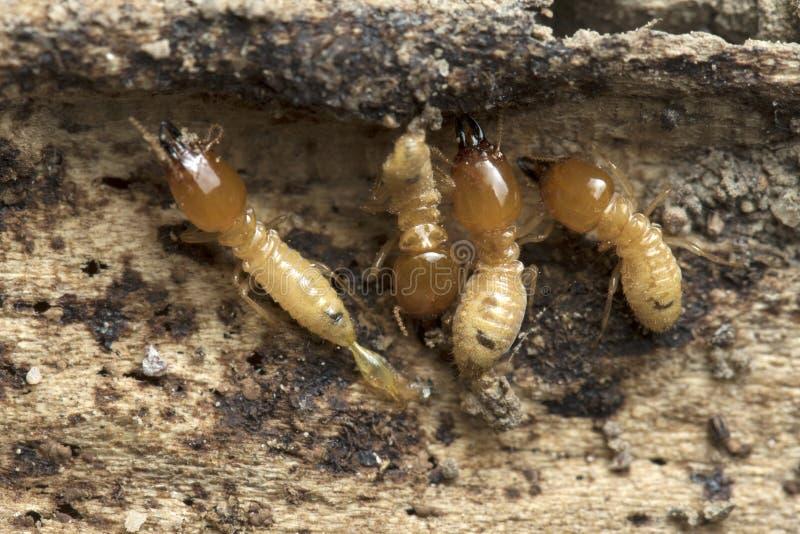 Termit- och termitkulle på naturbakgrund in och South East Asia arkivbild