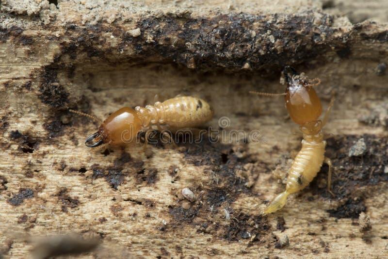 Termit- och termitkulle på naturbakgrund in och South East Asia arkivfoto