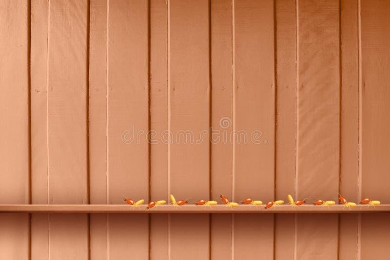 Termita, termitas en la pared de madera, termitas y decaimiento de madera, madera de la textura con la termita de la jerarquía u  libre illustration