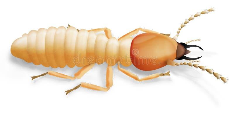 Termite. Realistic illustration of a termite soldier