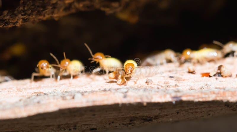 termite stockbilder