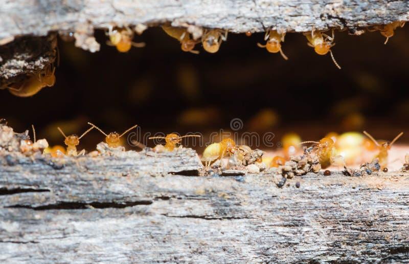 termite stockfotografie