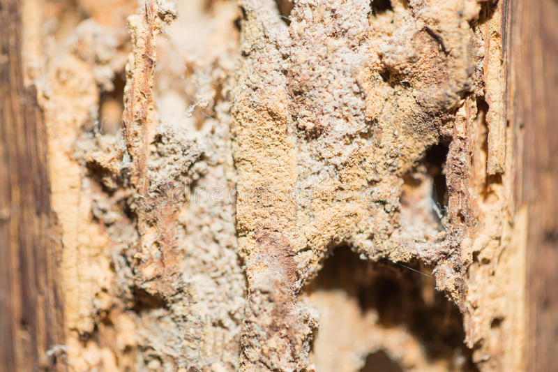 termite immagine stock libera da diritti
