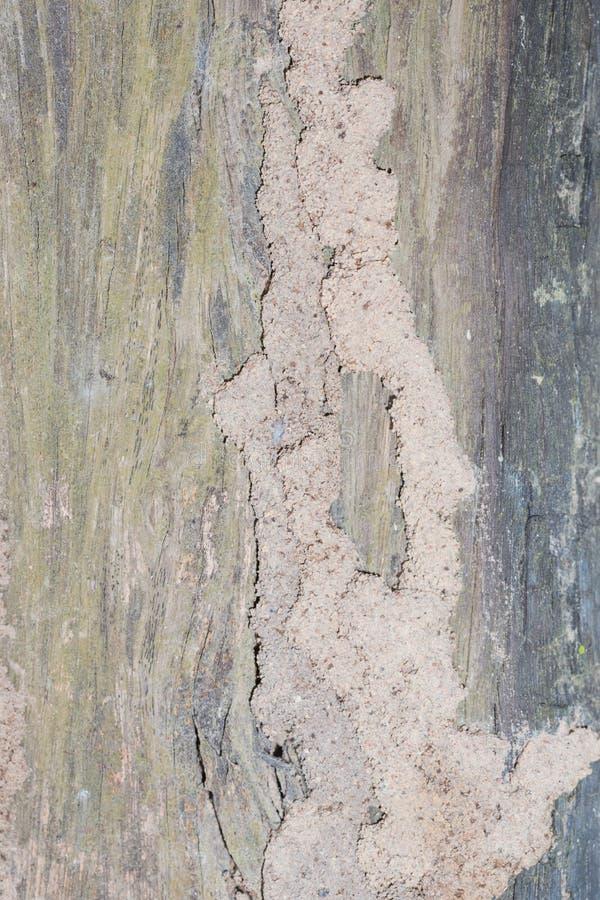 termite immagine stock