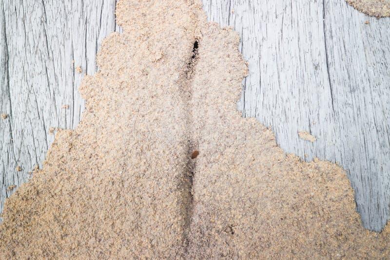 termite fotografia stock libera da diritti