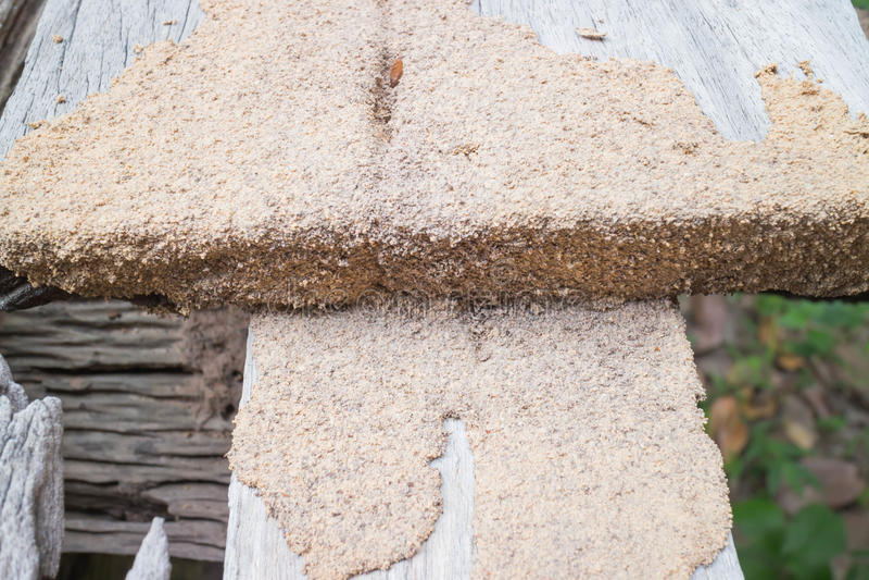 termite immagini stock libere da diritti