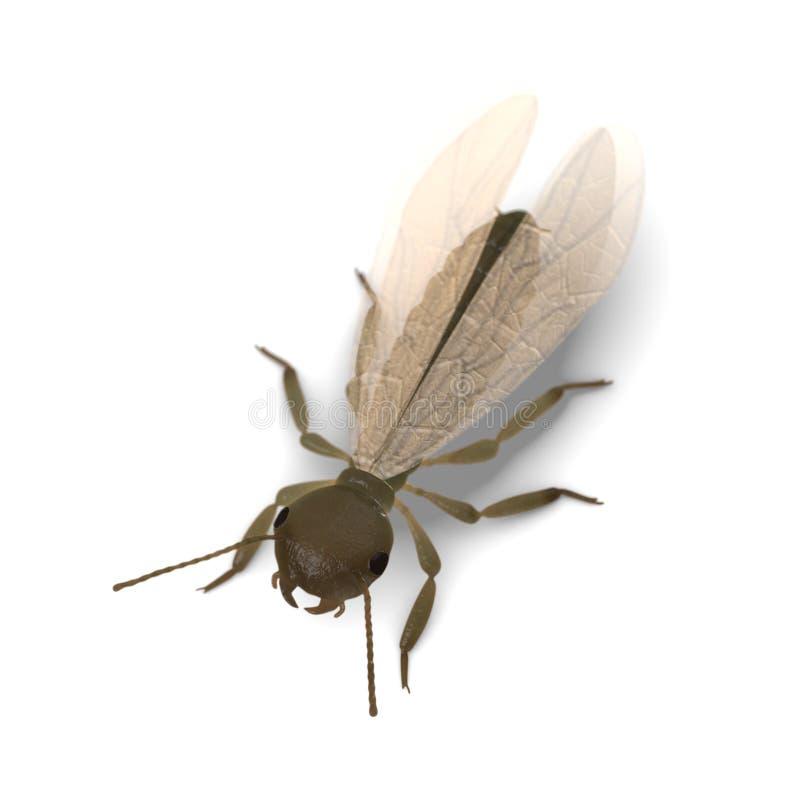 Termite alate (con le ali) royalty illustrazione gratis