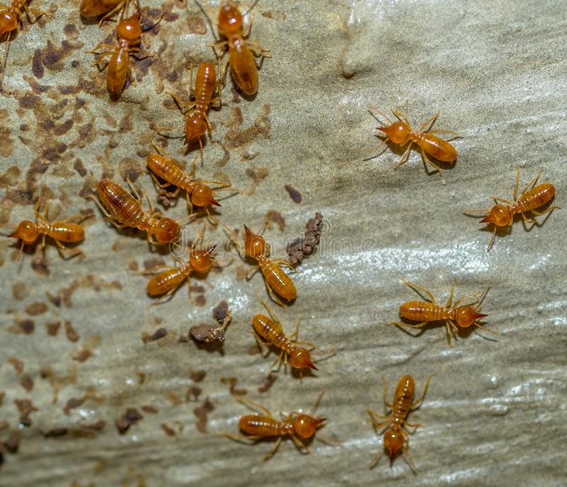 Termite colony macro shot royalty free stock image