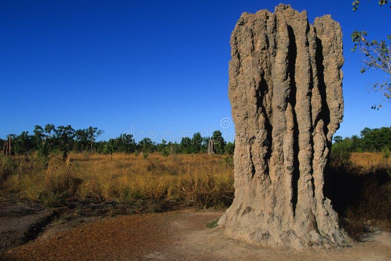 Termite-Damm in Nordaustralien stockfoto