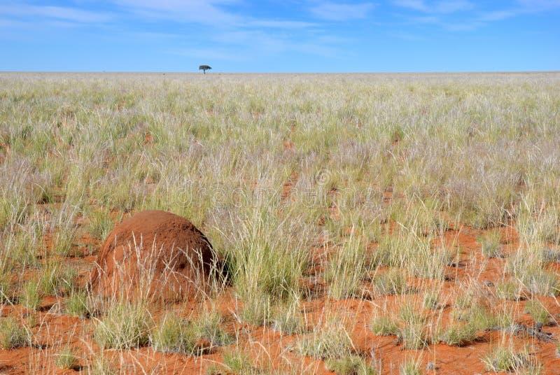Download Termite hill stock image. Image of endless, horizon, namibia - 26157425