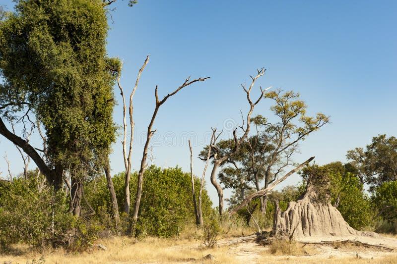 Termite hill in Africa stock photo