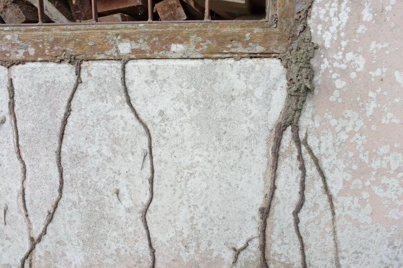 Termite hive on house stock photos