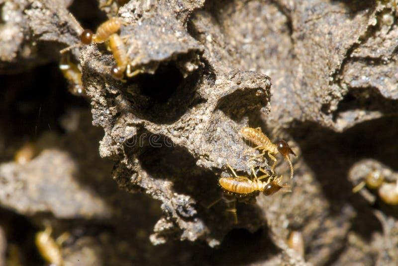 Termite-Kolonie lizenzfreie stockfotos