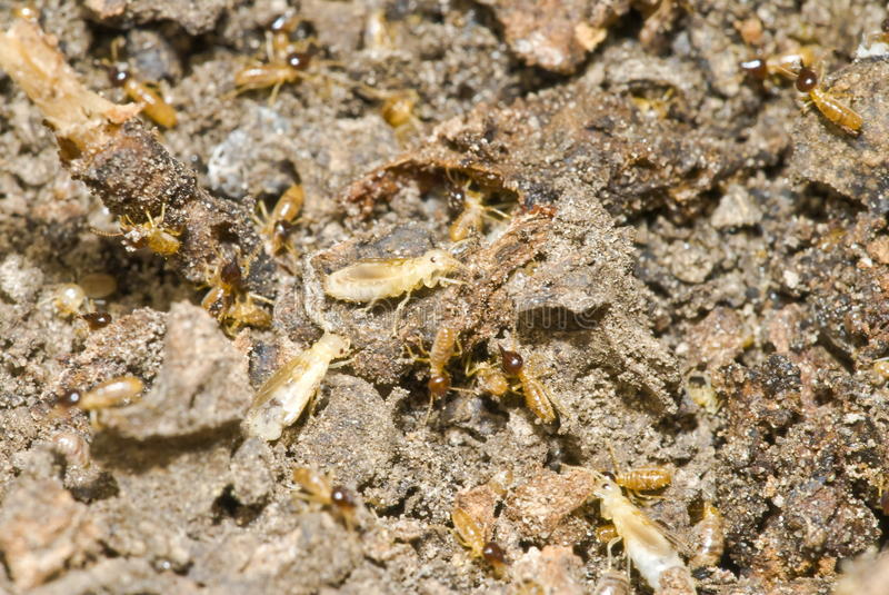 Termite-Kolonie lizenzfreies stockfoto
