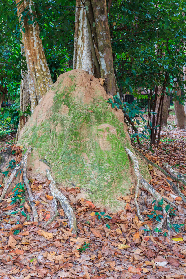 Termite mound in the park of Si Sa Ket, Thailand.  stock photo