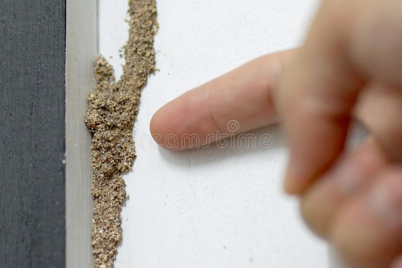 Termite problem in house stock photo