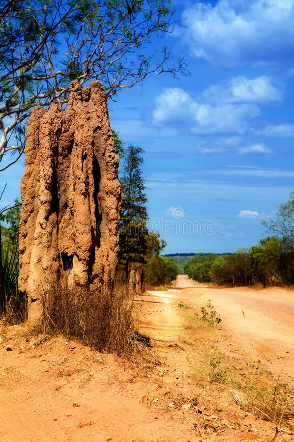 Download Termite tower stock photo. Image of northern, holt, nature - 18612126