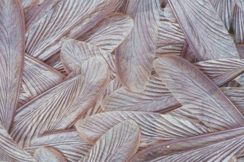 Termite wings stock image