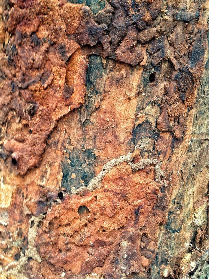 Termite wood stock images