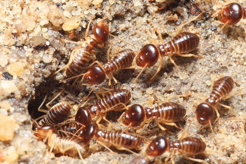 Termiteboden stockfotos