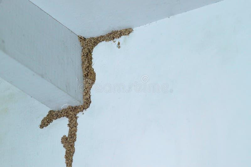 termiten stockfoto