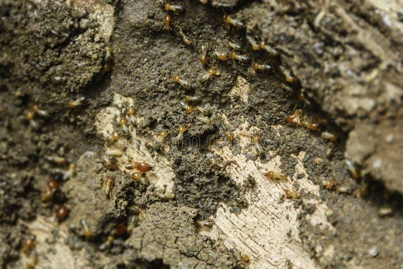 Termiten-Kolonie stockbild