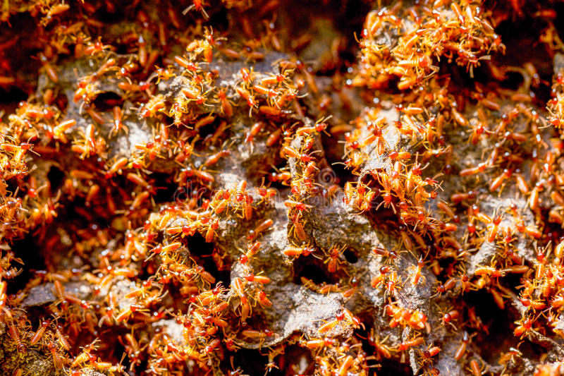 Termiten-Kolonien-Abschluss oben stockbild