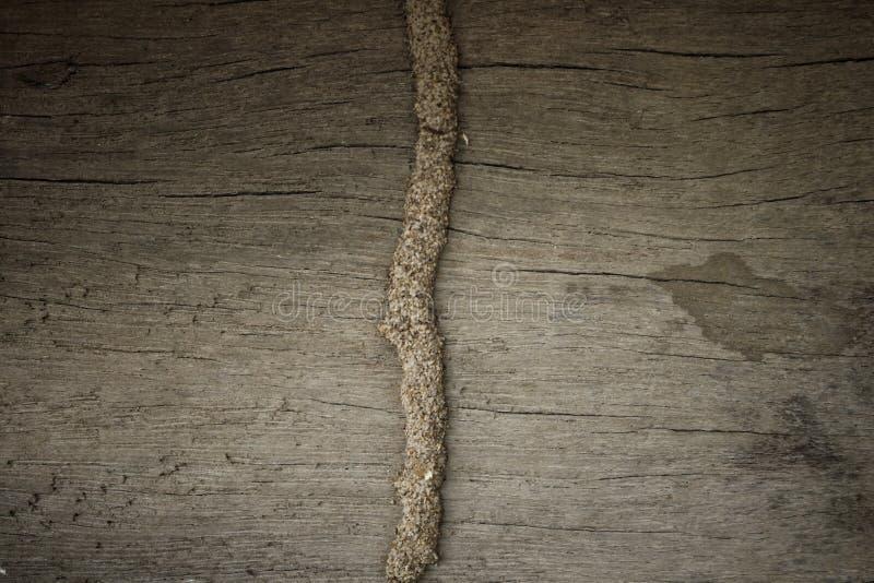 Termiten sind die Ursache des verfallenden Holzes, besonders das Haus, das hölzern ist, müssen Termiten beseitigen oder sie schüt stockfoto