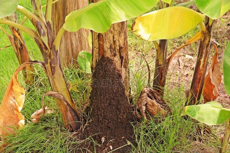 Termitenkolonie in einem Garten lizenzfreie stockfotos