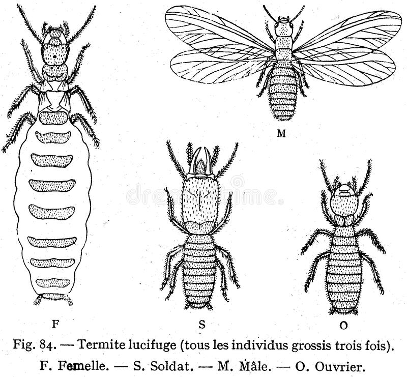 Termiter Gratis Allmän Egendom Cc0 Bild