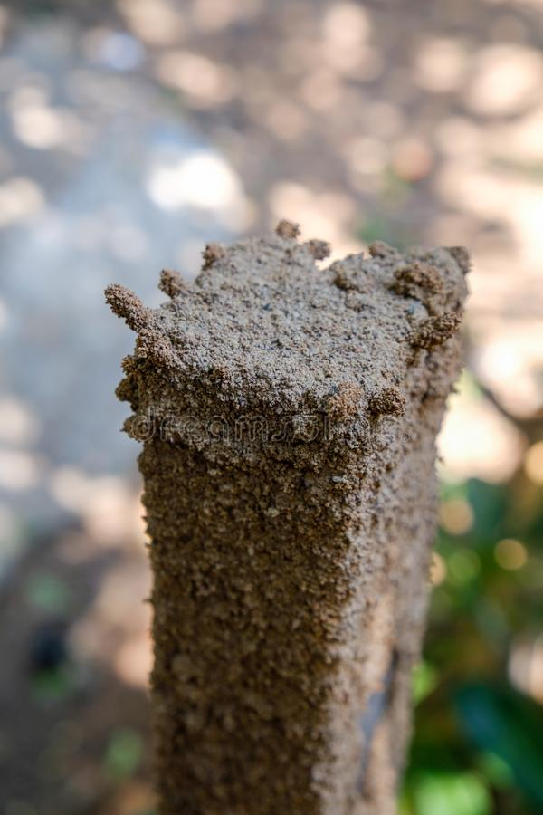 Termiter bygger hustar på trä, trä är termit food royaltyfri fotografi