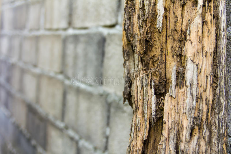 Termites erosion. Pole decay from termites erosion destroy a brick wall in the background stock images