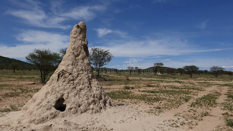 Termites, Namibia. Termites in the savanna, Namibia royalty free stock images