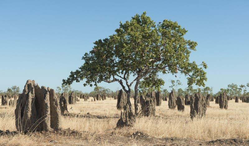 Termitkullar i den avlägsna norden av Queensland, arkivbild