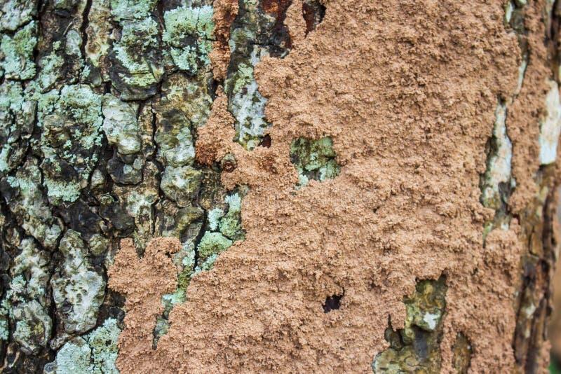 Termitrede på det stora trädet royaltyfri fotografi