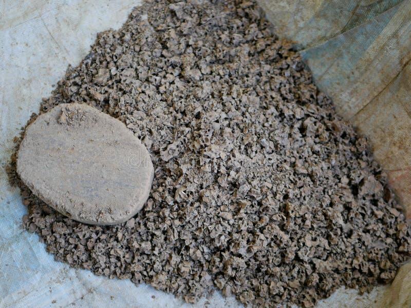 Termitreden med unga termit inom och att vara brutna, är klara att vara van vid matningshönor royaltyfri bild