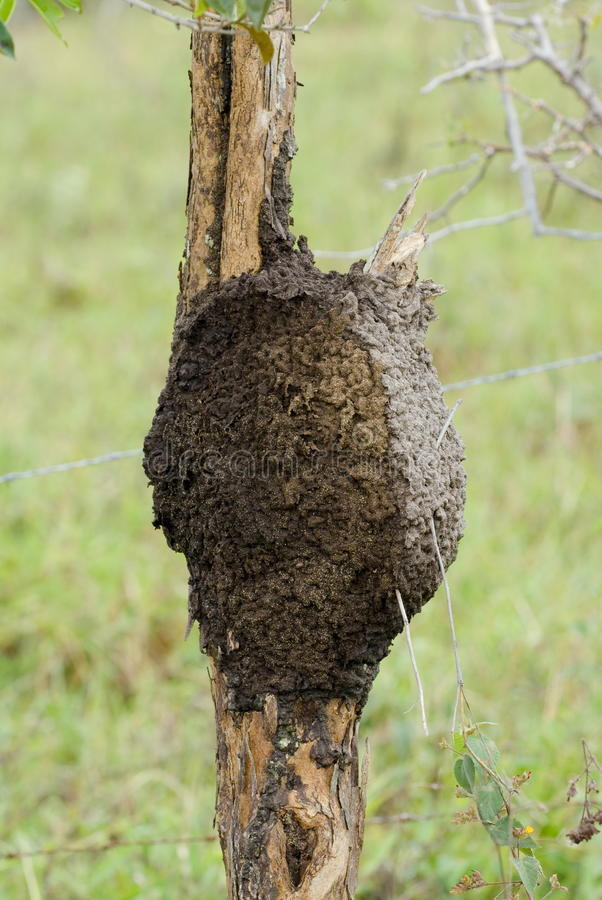 termity obraz royalty free