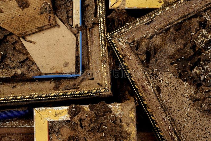 termity zdjęcia royalty free