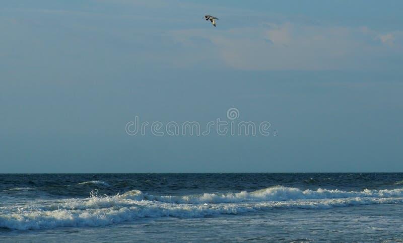 Tern Flying over the Atlantic Coastline at Carolina Beach. A tern bird flying over the Atlantic Ocean in Carolina Beach, North Carolina royalty free stock photos