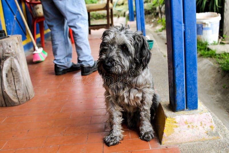 A ternura e a beleza de um cão imagem de stock