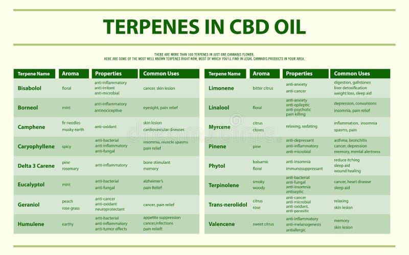Terpenes in CBD oil horizontal infographic royalty free illustration