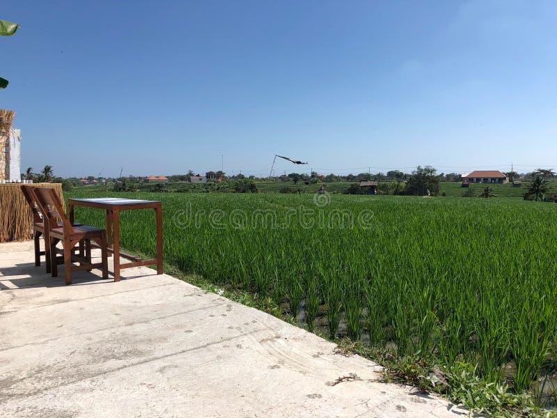 Terraço bonito do café com opinião verde dos campos do arroz Bali, Indon?sia imagem de stock