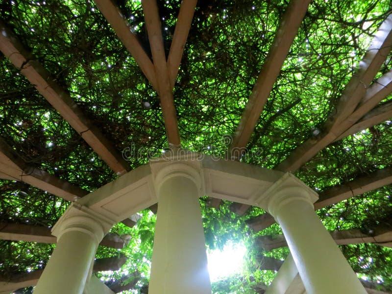 Terraço das árvores imagens de stock