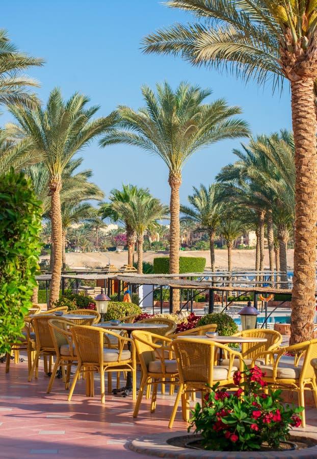Terraço de assentamento exterior, área do pátio, no sol, no céu azul e nas palmeiras imagens de stock royalty free