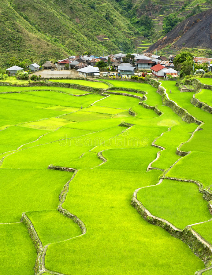 Terraço do arroz imagem de stock royalty free